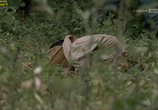 Сцена из фильма Похороните мое сердце в Вундед-Ни / Bury My Heart at Wounded Knee (2007)