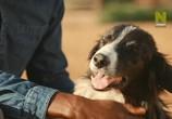 ТВ Удивительное семейство псовых / Dogs: An Amazing Animal Family (2017) - cцена 2
