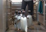 Фильм Пингвины мистера Поппера / Mr. Popper's Penguins (2011) - cцена 2