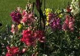 ТВ BluScenes: Цветущие сады / BluScenes: Flowering Gardensание (2012) - cцена 7