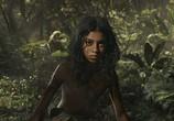 Сцена из фильма Маугли / Mowgli (2018)