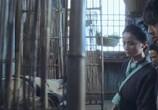 Фильм Бабочки-любовники / Mo hup leung juk (2008) - cцена 1