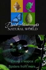 BBC: Наедине с природой: Пауки с марса