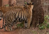 Сцена из фильма Банда тигриц / Tigress Blood (2014) Банда тигриц сцена 8