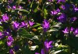 ТВ BluScenes: Цветущие сады / BluScenes: Flowering Gardensание (2012) - cцена 4