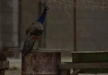 Сцена из фильма Полуночный экспресс / Midnight Express (1978) Полуночный экспресс сцена 8