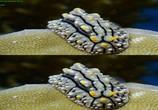 Сцена из фильма Последний риф 3D / The Last Reef 3D (2012) Последний риф 3D сцена 6