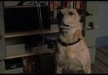 Сцена из фильма Лепрекон 6: Возвращение домой / Leprechaun: Back 2 tha Hood (2003) Лепрекон 6: Возвращение домой сцена 9