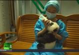Сцена из фильма Панды. Сделано в Чэнду (2016) Панды. Сделано в Чэнду сцена 4