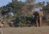 Сцена из фильма Сафари / Safari (1956) Сафари сцена 4