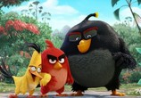 Сцена из фильма Angry Birds в кино / The Angry Birds Movie (2016)
