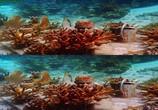 Сцена из фильма Последний риф 3D / The Last Reef 3D (2012) Последний риф 3D сцена 18