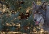 Сцена из фильма Волки и воины / Wolves and Warriors (2018) Волки и воины сцена 6