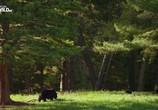 Сцена из фильма Дикий Йеллоустоун / Wild Yellowstone (2013) Дикий Йеллоустоун сцена 5