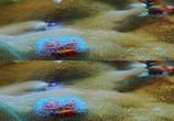 Сцена из фильма Последний риф 3D / The Last Reef 3D (2012) Последний риф 3D сцена 10