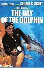 День дельфина
