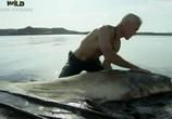 ТВ Discovery Channel: Animal Planet: Речные монстры / River monsters (2009) - cцена 5