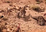 ТВ Сказание о динозаврах / Dinotasia (2012) - cцена 4
