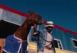 Сцена из фильма Чемпион / Secretariat (2010) Секретариат сцена 2