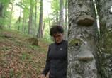 ТВ Тайное царство: Грибы, определившие наш мир / The Kingdom: How Fungi Made Our World (2018) - cцена 4