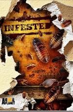 Animal Planet: Вторжение паразитов