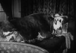 Сцена из фильма Золотой Век / L' Age D'or (1930) Золотой Век сцена 13