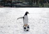 Фильм Пингвины мистера Поппера / Mr. Popper's Penguins (2011) - cцена 1