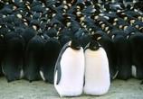 Сцена из фильма Трилогия: Микрокосмос, Птицы, Океаны / Trylogy: Microcosmos, Winged Migration, Oceans (1996)