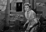 Фильм Неудачник и я / The Egg and I (1947) - cцена 1