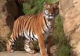 Сцена из фильма Книга джунглей: История Маугли / The Jungle Book: Mowgli's Story (1998) Книга джунглей: История Маугли сцена 2