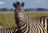 ТВ Дикие места Африки / Africa's Wild Side (2018) - cцена 1