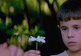Сцена из фильма Язык бабочек / La lengua de las mariposas (1999) Язык бабочек сцена 15