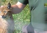 ТВ Хищные питомцы / Predator Pets (2017) - cцена 2