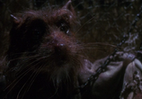 Фильм Черепашки-ниндзя / Teenage Mutant Ninja Turtles (1990) - cцена 1