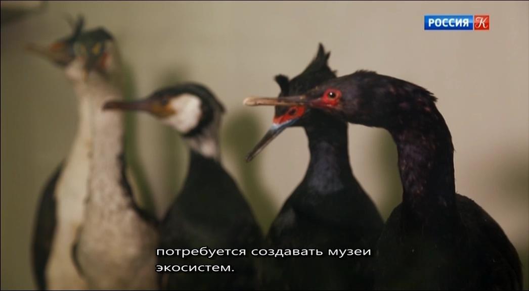 Белый Бим Черное ухо (1976) скачать бесплатно через торрент