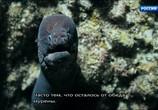 ТВ Морские гиганты Азорских островов / Giants of the Atlantic Azores (2016) - cцена 2