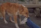 Фильм Мой пес Бинго / Bingo (1991) - cцена 3