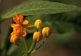 ТВ BluScenes: Цветущие сады / BluScenes: Flowering Gardensание (2012) - cцена 2