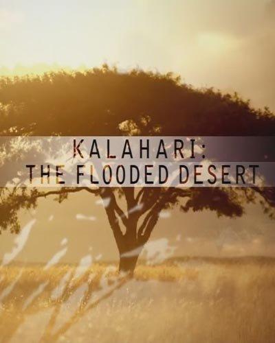 National Geographic: Лисицы пустыни Калахари 1997 смотреть