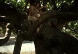 Сцена из фильма Рани / Rani (2011) Рани сцена 6
