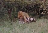 Фильм Сафари / Safari (1956) - cцена 5