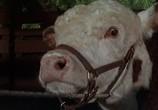 Фильм Редкая порода / The Rare Breed (1966) - cцена 2