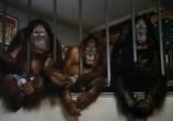 Сцена из фильма Обезьянник / Going Ape! (1981)