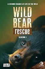 Спасение диких медведей