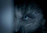 Сцена из фильма Волки / Wolves (2014)