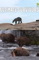 Как выживают медведи