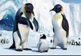 Мультфильм Делай ноги / Happy Feet (2006) - cцена 2