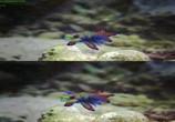 Сцена из фильма Последний риф 3D / The Last Reef 3D (2012) Последний риф 3D сцена 9