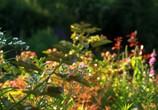 ТВ BluScenes: Цветущие сады / BluScenes: Flowering Gardensание (2012) - cцена 5