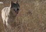 Сцена из фильма Дикий Йеллоустоун / Wild Yellowstone (2013) Дикий Йеллоустоун сцена 1